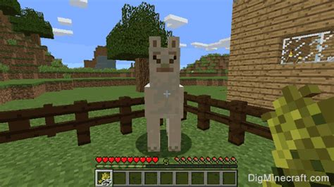 How to Feed a Llama in Minecraft