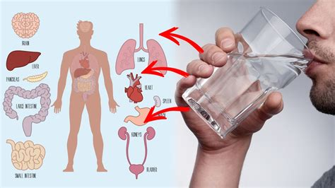 10 Health Benefits of Drinking Warm Water - YouTube